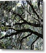 Magnolia Meets Live Oak Metal Print