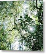 Magnolia Plantation Sc Metal Print