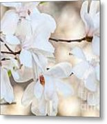 Magnolia Spring Metal Print
