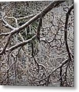 Magnolia Tree Branches Covered With Ice No.3834 Metal Print