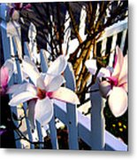 Magnolis's On A Picket Fence Metal Print
