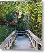 Mahogany Hammock Metal Print by Kenneth Albin