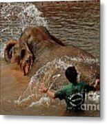 Bathing An Elephant Laos Metal Print
