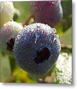 Maine Blueberries Metal Print