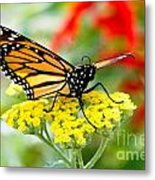 Majestic Monarch Metal Print