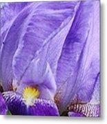 Majestic Purple Iris Metal Print