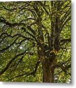 Majestic Tree Metal Print