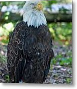 Majesty 1 Metal Print