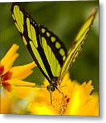Malachite Butterfly On Flower Metal Print by Craig Tuttle