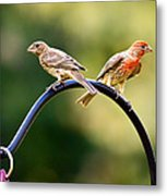 Male And Female House Finch Metal Print