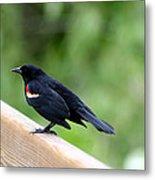 Male Red-winged Blackbird Metal Print