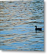 Mallard Duck And Blue Water Metal Print by Marianne Campolongo