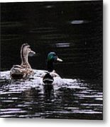 Mallards - Like Walking In The Rain Metal Print