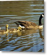 Mama Honker And Goslings Metal Print