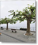 Man With Dog Walking On Empty Promenade With Trees Metal Print