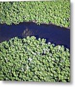 Mangrove River Metal Print