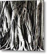 Mangrove Tentacles  Metal Print