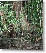 Mangroves Metal Print