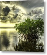 Mangroves I Metal Print