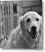 Mans Best Friend Metal Print