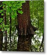 Maple In The Water Metal Print