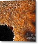 Maple Leaf Frosted Metal Print