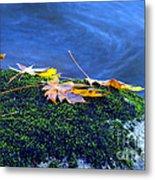 Maple Leaves On Mossy Rock Metal Print