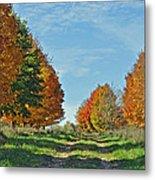 Maple Tree Lane Metal Print