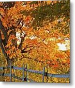 Maple Trees And A Rail Fence In Autumn Metal Print