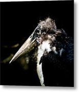 Marabou Stork Metal Print