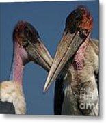 Marabou Storks Metal Print
