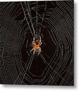 Marbled Orb Weaver Spider Metal Print