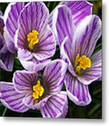 March's Gift Metal Print