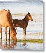 Mare And Foal Metal Print by Bob Decker