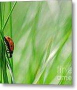 Ladybug In The Meadow Metal Print