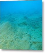 Marine Worm Mounds Metal Print by Alexis Rosenfeld
