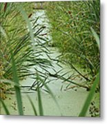 Marsh-field Ma Metal Print