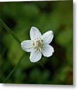 Marsh Grass-of-parnassus Metal Print