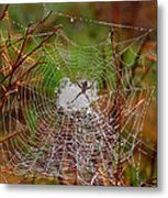 Marsh Spider Web Metal Print