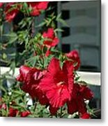 Martha's Vineyard Red Hibiscus And Porch Metal Print