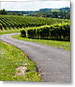 Maryland Vineyard Panorama Metal Print
