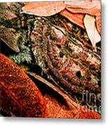 Mata Mata Turtle Metal Print