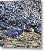 Matching Colors Metal Print