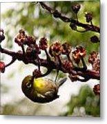 Maui Bird Metal Print