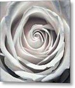 May Rose Metal Print