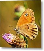 Meadow Brown Butterfly  Metal Print
