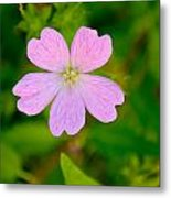 Meadow Checker Mallow Metal Print