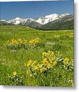 Meadow Landscape Metal Print