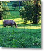 Meal Time Metal Print