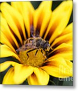 Meant To Bee Metal Print